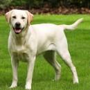 σκύλος φόλα ποινικό
